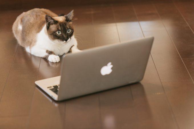 プログラミングする猫